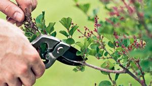 pruning_0311